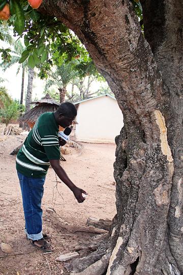 tree-aw